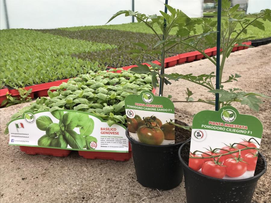 Piantine orto e fiori stagionali vendita pellet for Attrezzatura agricola usata lazio